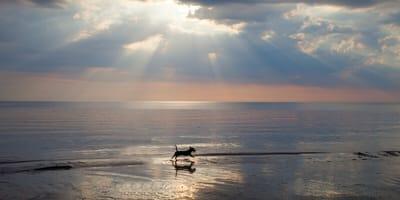Dog running on the beach towards heaven