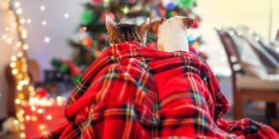 perro gato navidad