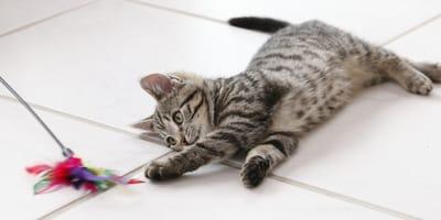 Spielspaß für den Stubentiger: 5 Katzenspielzeuge zum Selberbasteln