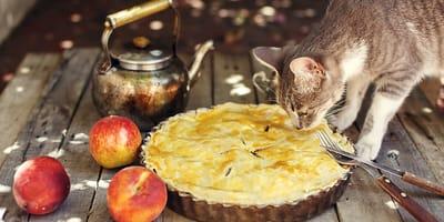 8 recetas muy fáciles de comida para gatos para preparar en casa