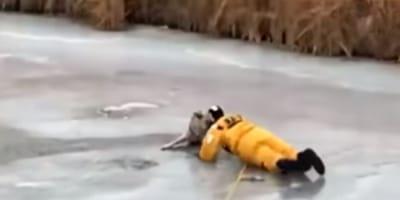 perrito siendo rescatado en un lago helado