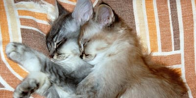 Adorable little kittens cuddling up