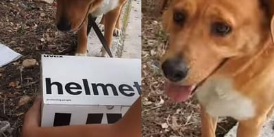 Dog discovers abandoned box