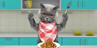 Cómo alimentar a un gato: 5 consejos para que tu gato siga una alimentación adecuada