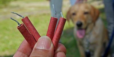 Hund mit Silvesterknallern