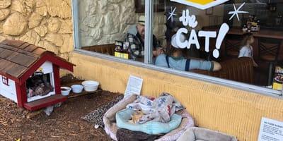 Kot_Denny_przed_restauracja
