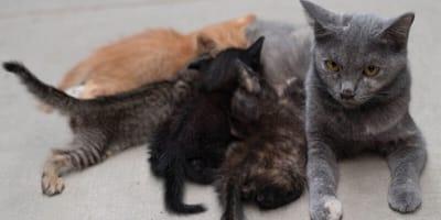 Cztery małe kotki