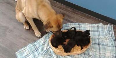 Cane-e-gattini-neri-nel-cesto