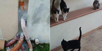 Cats rescued after being bricked up behind wall