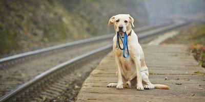 Entlaufener Hund am Bahnsteig