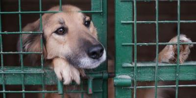 Ein Hund im Tierheim