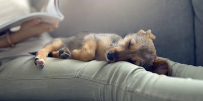 Schlafpositionen der Hunde - Was sagen sie über den Vierbeiner aus?