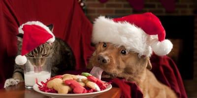 gato y perro disfrutan recetas de navidad  caseras