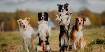 Oryginalne imiona dla psów - poznaj nasze propozycje!