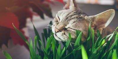 Cosa succede se il gatto mangia l'erba?