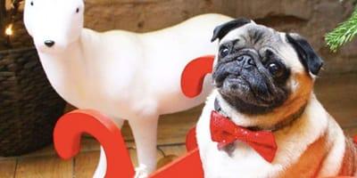 A very doggy Christmas