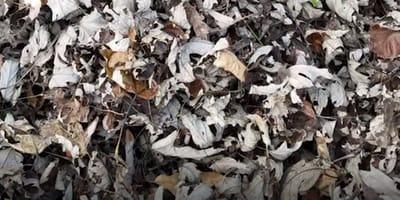 Kot ukrył się sprytnie w liściach: czy uda Ci się go wypatrzeć?