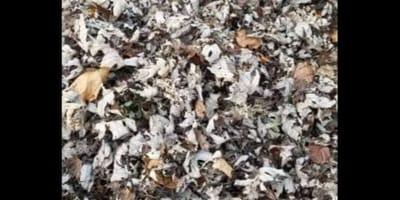Gatto nascosto tra le foglie morte: riesci a trovarlo?