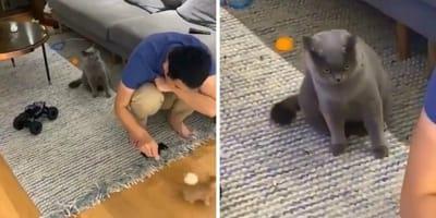 video viral reaccion gato por celos