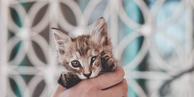 Kätzchen in Hand
