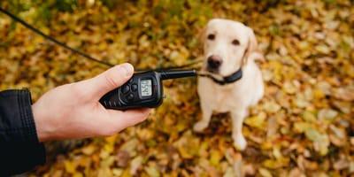polemica debate uso collares electricos perros