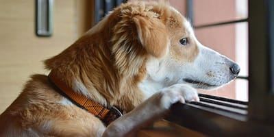 Survey suggests 20% of owners think it's fine leaving a dog alone for over a day