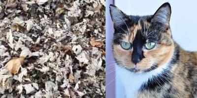 Kot ukryty w liściach