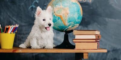 Schulhunde sind Teil der tiergestützten Pädagogik