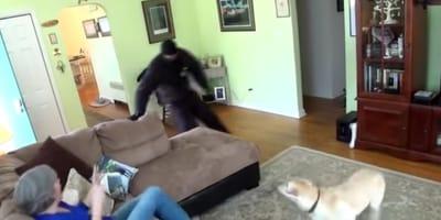 ladro in casa con donna e cane