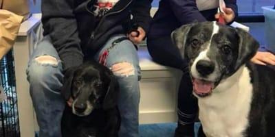 Przyszedł do weterynarza ze swoimi psami. Jego słowa sprawiły, że wszyscy zaniemówili