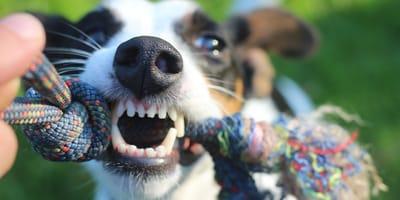 cane con gioco in bocca cambia i denti