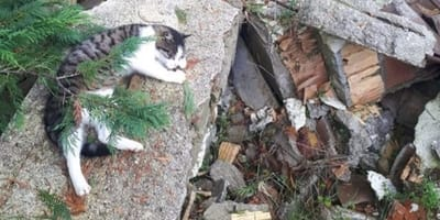 gatto-custodisce-le-macerie-dopo-il-terremoto-ad-accumoli