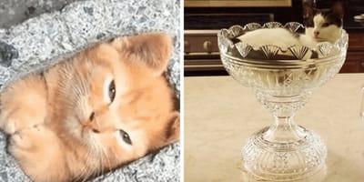 18 gatos metidos en sitios súper pequeños: ¡¿Cómo lo hacen?!