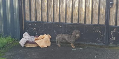 Der Dackel mit seinem Hundekorb