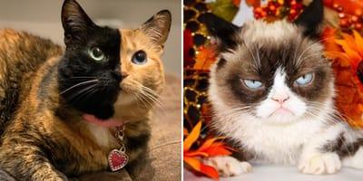 gatos con mas seguidores de instagram