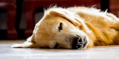 Trauer über den Tod des geliebten Hundes