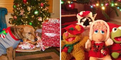 perros y gatos odian navidad