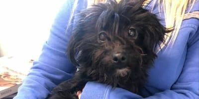 mujer adopta perros refugio salvados eutanasia