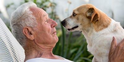 Psie lata - jak obliczyć wiek psa?