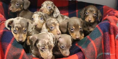 The pups will be re-homed in the new year