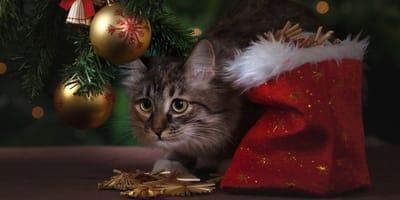 gatto-vicino-ad-albero-di-natale