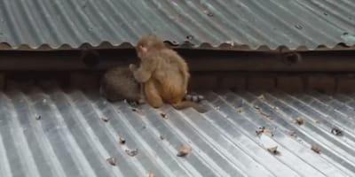 gato y mono amigos