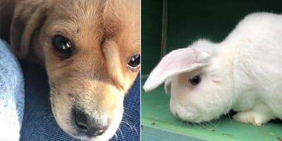 perro y conejo unicornio
