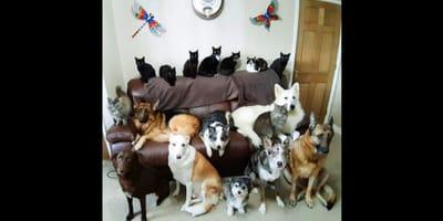 Psy_i_Koty_Kathy_17_zwierząt