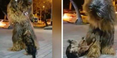 Bezdomny pies i Chewbacca