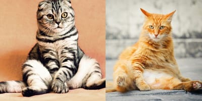 Cats sitting in funny position