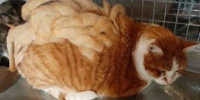 gatto con dreadlock