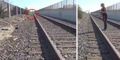 shar pei on train tracks
