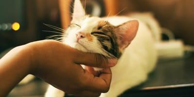 kot i jego pani