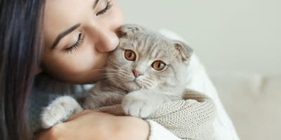 Do cats get attached to their owners?